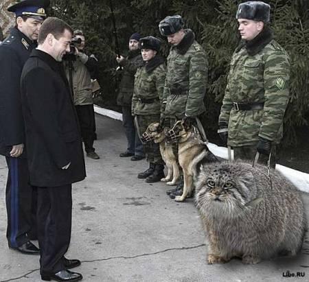 Блогосфера о потерянном коте Медведева (фото, видео) | АДИ ...: http://adi19.ru/2012/03/29/blogosfera-o-poteryannom-kote-medvedeva/